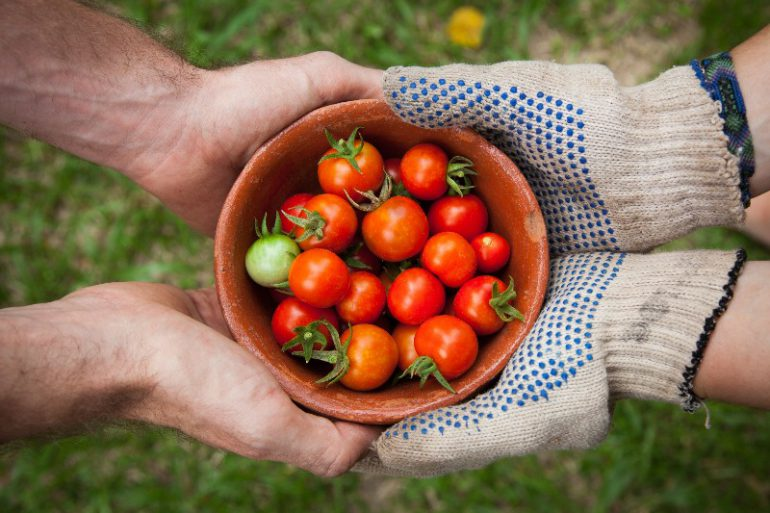 donor gives tomatos to someone
